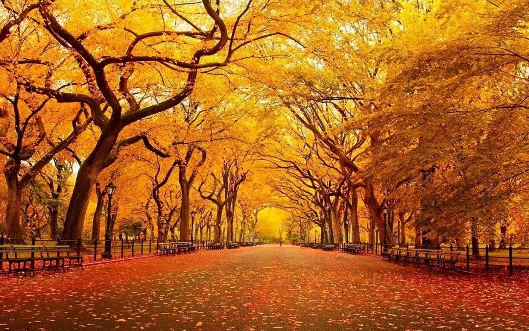 Meditatieve Stiltewandeling woensdag 28 november