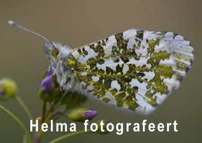 Helma fotografeert natuur!
